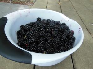 18 berries