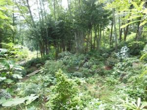 18 devoe garden